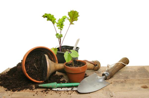 เทคนิคสำหรับมือใหม่! การปลูกต้นไม้